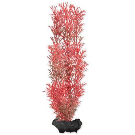 Rostlina Red Foxtail 23cm M