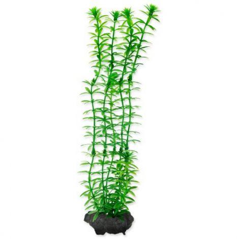 Rostlina Anacharis Tetra M 23cm