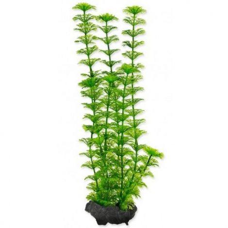 Rostlina Ambulia Tetra L 30cm